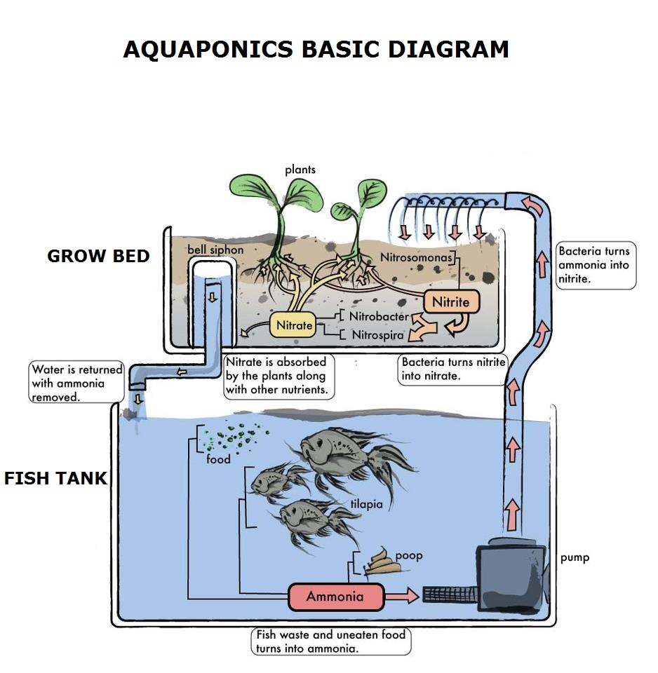 Aquaponics illustration