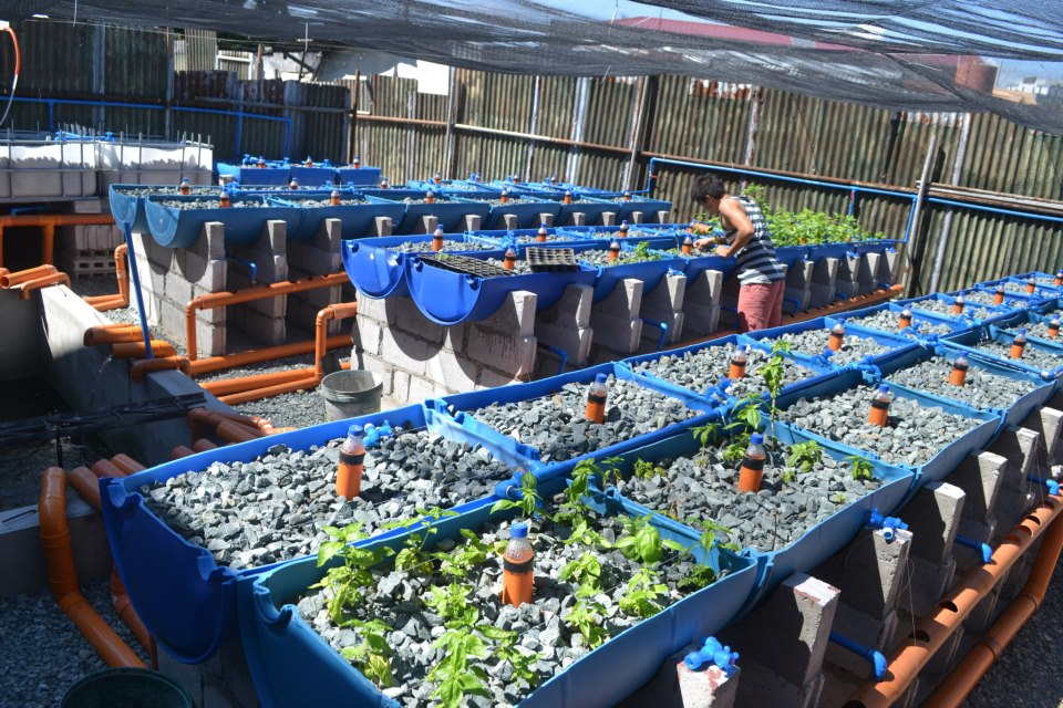 Aquaponics – A Concept from Three Inspiring Young Filipinos