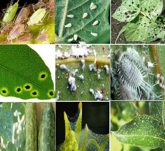 Image Gallery Plant Pests