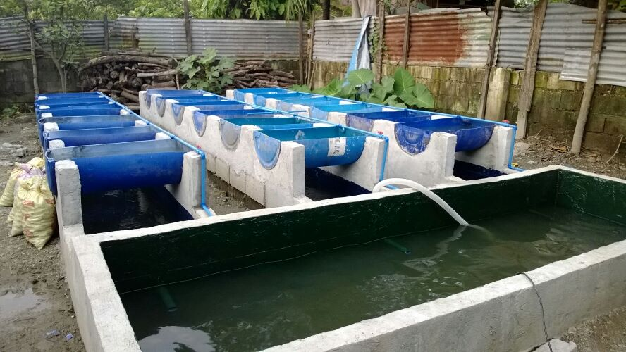 Aquaponics in the philippines aquaponics philippines for Aquaculture fish tanks