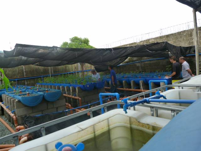 Aquaponics in the Philippines   Aquaponics Philippines