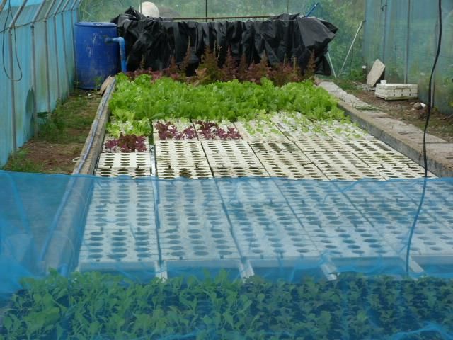 Commercial Aquaponics Setups In The Philippines