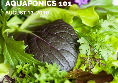 Aquaponics 101 on August 13, 2016 in Pasay