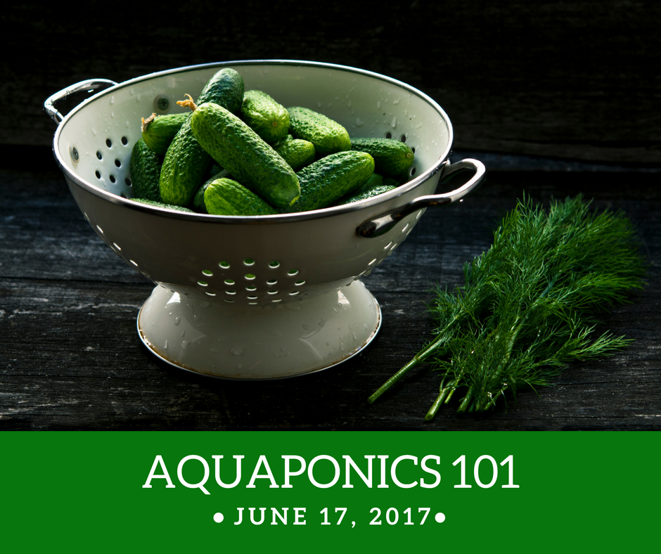 Aquaponics 101 on June 17, 2017 in Pasay