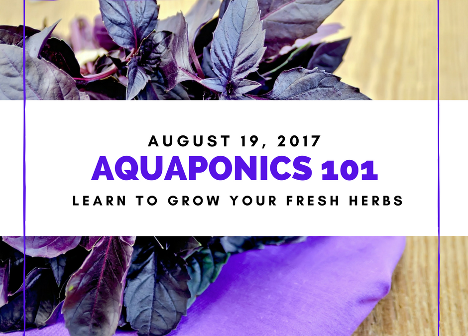 AQUAPONICS 101 on August 19, 2017 in Pasay