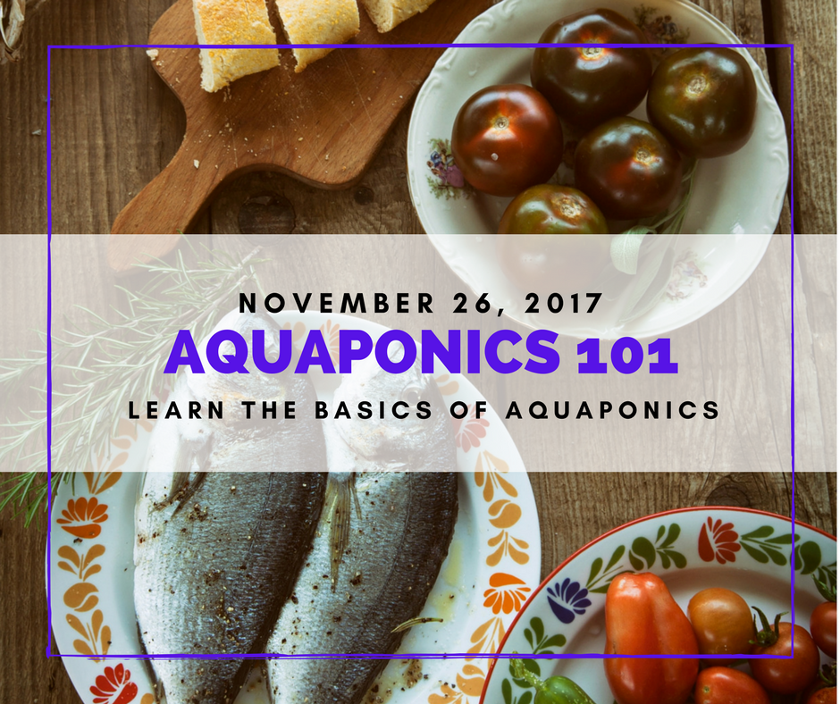 Aquaponics 101 on Nov. 26, 2017 in Pasay