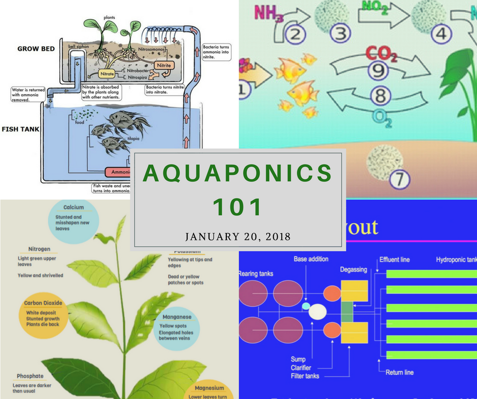 Aquaponics 101 on Jan. 20, 2018 in Pasay