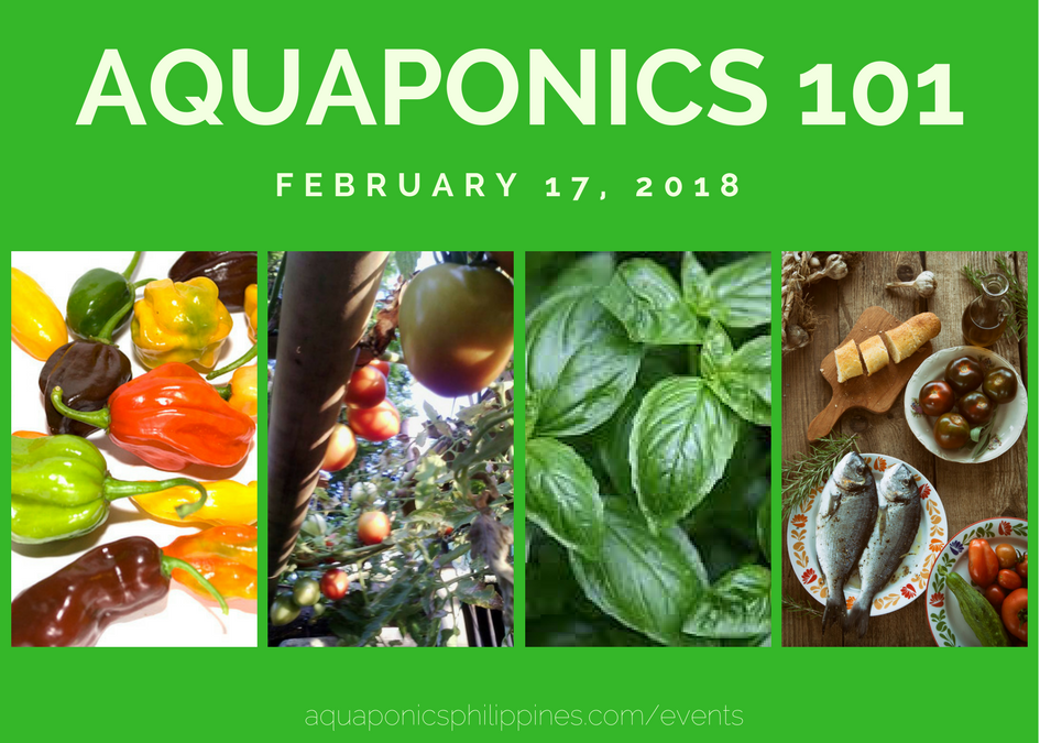Aquaponics 101 on February 17, 2018 in Pasay