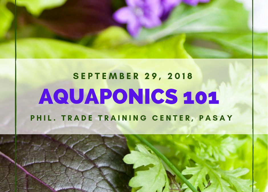 Aquaponics 101 on Sept. 29, 2018 at PTTC, Pasay