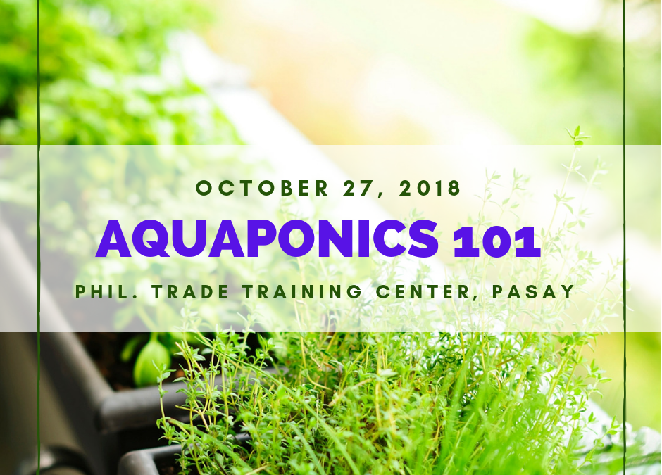 Aquaponics 101 on Oct. 27, 2018 at PTTC, Pasay