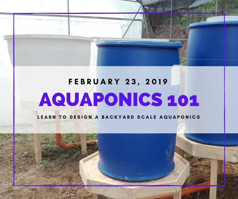 Aquaponics 101 on Feb. 23, 2019 at PTTC, Pasay