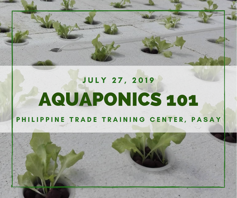 Aquaponics 101 on July 27, 2019 at PTTC, Pasay