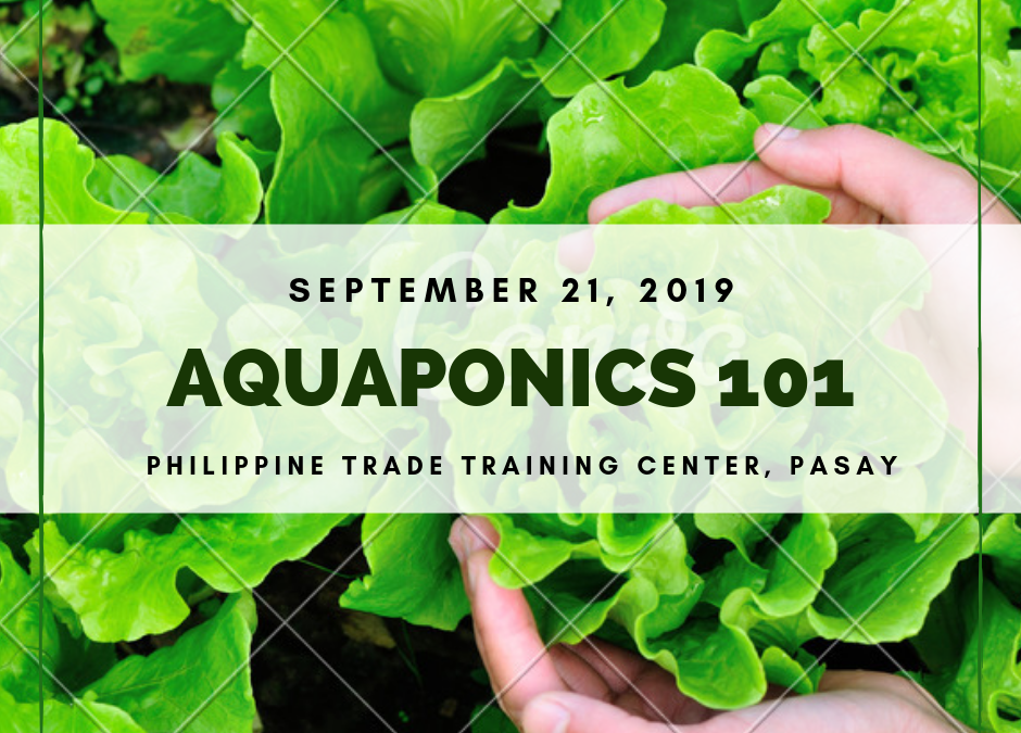 Aquaponics 101 on Sept. 21, 2019 at PTTC, Pasay