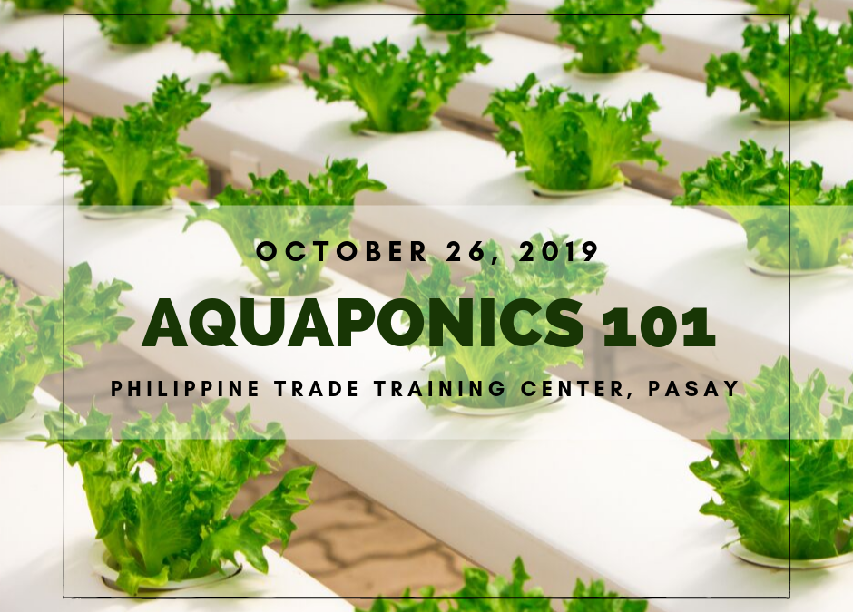 Aquaponics 101 on Oct. 26, 2019 at PTTC, Pasay
