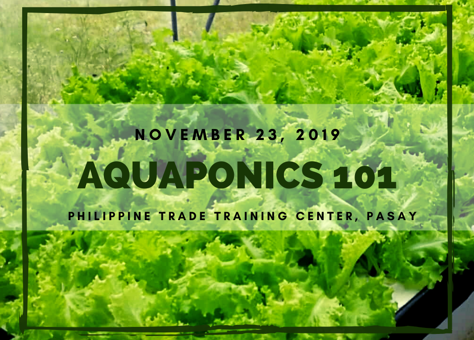 Aquaponics 101 on Nov. 23, 2019 at PTTC, Pasay
