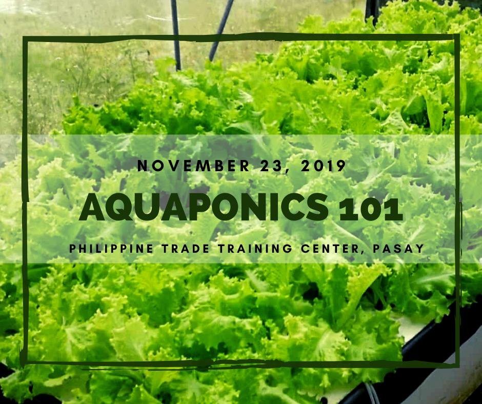 Aquaponics 101 on Nov. 23, 2019 at PTTC, Pasay
