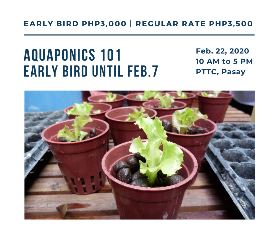 Aquaponics 101 on Feb. 22, 2020 at PTTC, Pasay